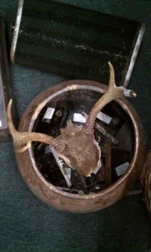 Antlers from NV
