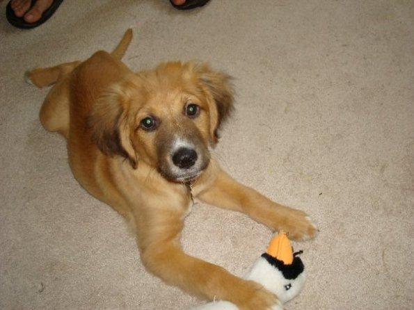 Gus 5 months