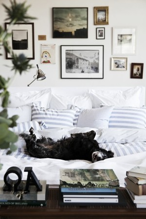 White bed with blue striped pillow and black dog